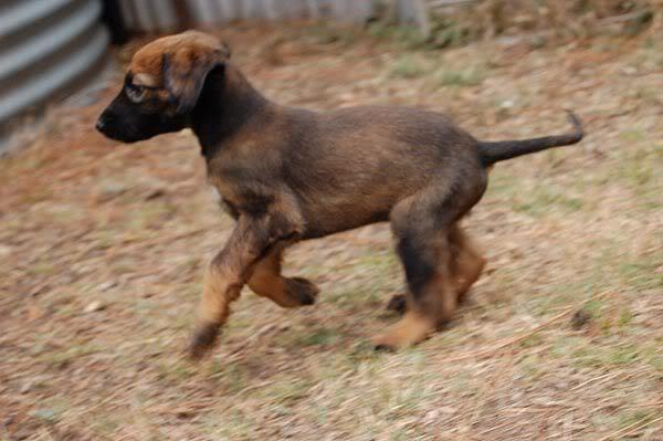 Rygel running 6 weeks