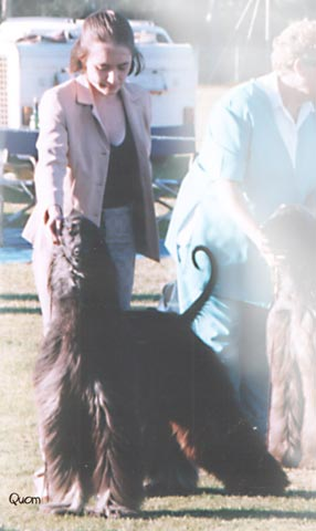 Piper winning Intermediate bitch at the QAHA Specialty 2003