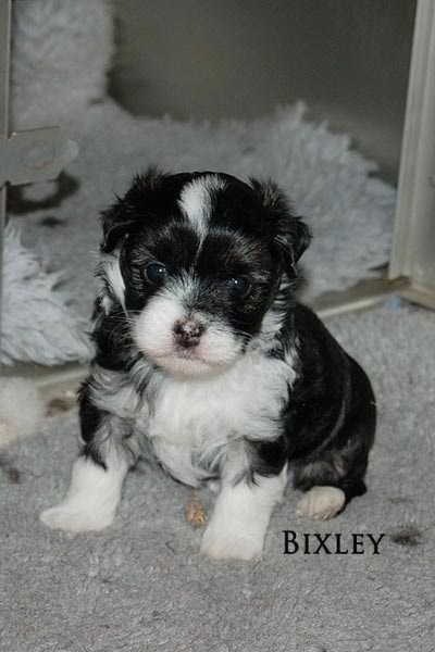 Bixley 6 weeks