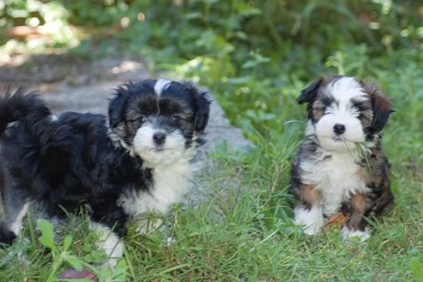 Bixley & Heidi 8 weeks