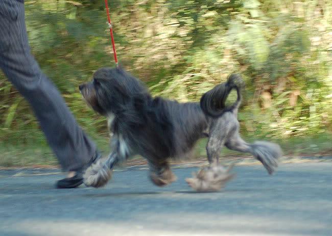 Juju on the move