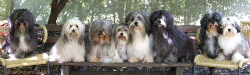 Lowenhart Dogs 2006