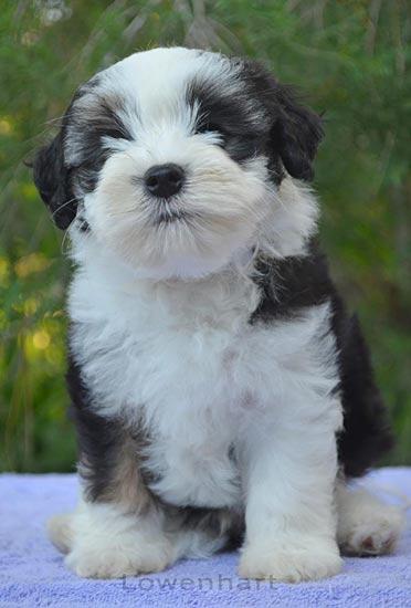 Parker 8 weeks