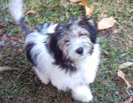Velvet puppy