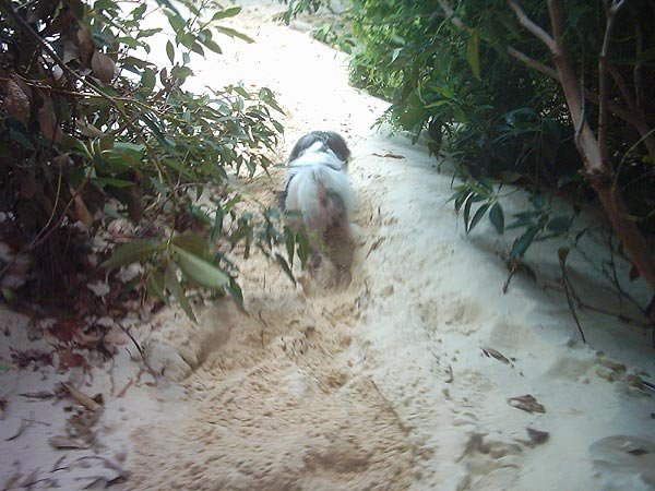 Gupster walking down a sand dune