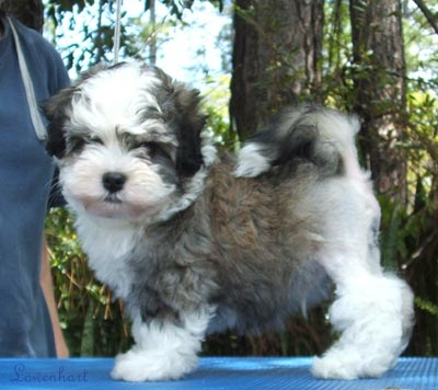 Manana at 8 weeks