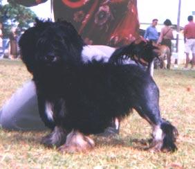 Latara 4 months old
